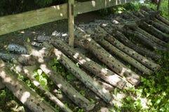 Tronchi dell'ontano per il fungo di shiitake Fotografie Stock Libere da Diritti