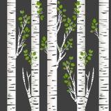 Tronchi della betulla nella notte Illustrazione Vettoriale