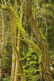 Tronchi della foresta con muschio immagini stock