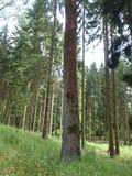 Tronchi di albero fotografia stock libera da diritti