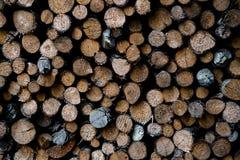 Tronchi di albero accatastati Fotografia Stock Libera da Diritti