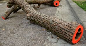 Tronchi di albero con rosso sul taglio sul marciapiede fotografia stock
