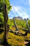 Tronchi di albero curvati in Torres del Paine Fotografia Stock Libera da Diritti