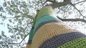Tronchi di albero decorati con vestito nelle creazioni meravigliosamente tricottate in vari colori video d archivio