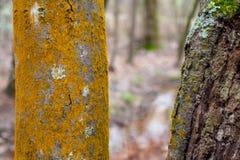 Tronchi di albero del terreno boscoso con i muschi strutturati fotografia stock libera da diritti