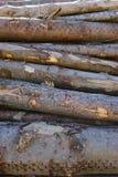 Tronchi di albero impilati, struttura della corteccia fotografie stock