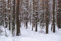 Tronchi di albero nella foresta di inverno Immagini Stock