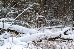 Tronchi di albero nella foresta di inverno Fotografia Stock