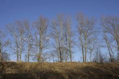 Tronchi di albero nudi su un hil immagine stock libera da diritti