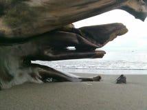 tronchi di albero sulla spiaggia fotografia stock libera da diritti