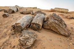 Tronchi di legno petrificato nel deserto di pietra nel Sudan immagine stock