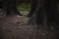 Tronchi neri nella foresta scura Immagine Stock