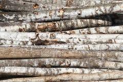 tronchi a strisce della betulla fotografie stock libere da diritti