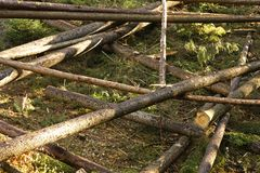 Tronchi in una foresta fotografie stock libere da diritti