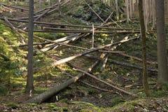 Tronchi in una foresta fotografia stock libera da diritti