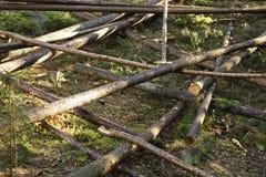 Tronchi in una foresta fotografia stock