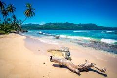 Tronco abandonado en la playa de Playa Rincon en la República Dominicana Fotos de archivo libres de regalías