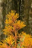 Tronco anaranjado de la planta y de árbol foto de archivo