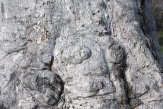 Tronco anudado nudoso Foto de archivo libre de regalías