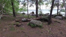 Tronco caído no lago entre as rochas e as árvores filme