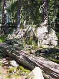 Tronco caido de un árbol viejo Imagen de archivo