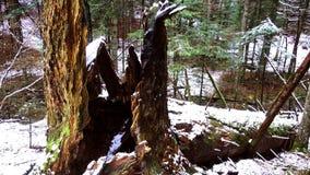 Tronco caido grande de la picea, abeto en el bosque, río de la montaña, corriente, cala con los rápidos en el último otoño, invie almacen de video