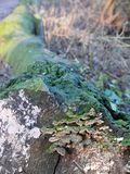 Tronco com cogumelos imagens de stock