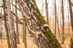 Tronco com musgo e cogumelos Imagens de Stock