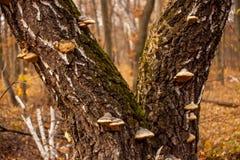 Tronco com musgo e cogumelos Fotografia de Stock