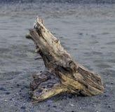 Tronco corroído en la orilla de mar Imagen del color Foto de archivo
