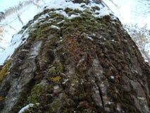 Tronco da árvore Fotos de Stock Royalty Free