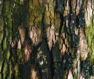 Tronco da árvore para o fundo fotos de stock royalty free