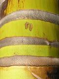 Tronco da palma Fotografia de Stock