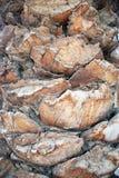 tronco da palmeira Imagem de Stock Royalty Free