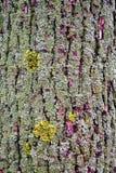 Tronco da textura coberto densamente com o musgo Foto de Stock Royalty Free
