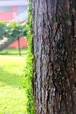 Tronco de árbol imagenes de archivo