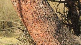 Tronco de árbol metrajes