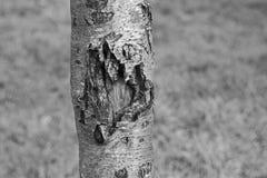 Tronco de árbol Fotografía de archivo
