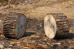 Tronco de árbol aserrado dos Imagen de archivo libre de regalías