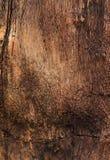 Tronco de árbol aterrorizado colorido texturizado como backgroun Imagen de archivo