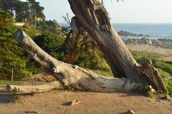 Tronco de árbol caido Foto de archivo libre de regalías