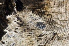 Tronco de árbol calcinado Imágenes de archivo libres de regalías