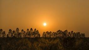 Tronco de árbol, cielo de oro foto de archivo libre de regalías