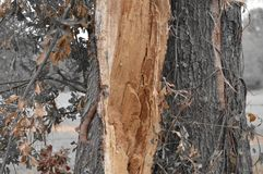 Tronco de árbol con colores únicos de hojas Imagen de archivo