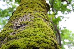 Tronco de árbol con el musgo Foto de archivo