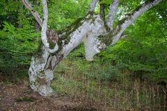 Tronco de árbol con el musgo Imagenes de archivo