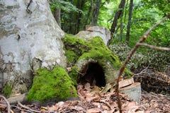 Tronco de árbol con el musgo Fotografía de archivo libre de regalías