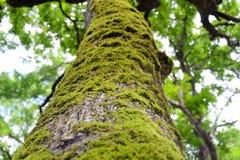 Tronco de árbol con el musgo Foto de archivo libre de regalías