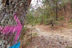 Tronco de árbol con la muestra de la flecha imagen de archivo