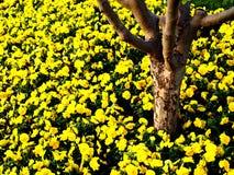 Tronco de árbol con las flores amarillas Imagen de archivo libre de regalías